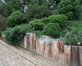 Tieto borovice sú nádherné... Určite si zasadím.