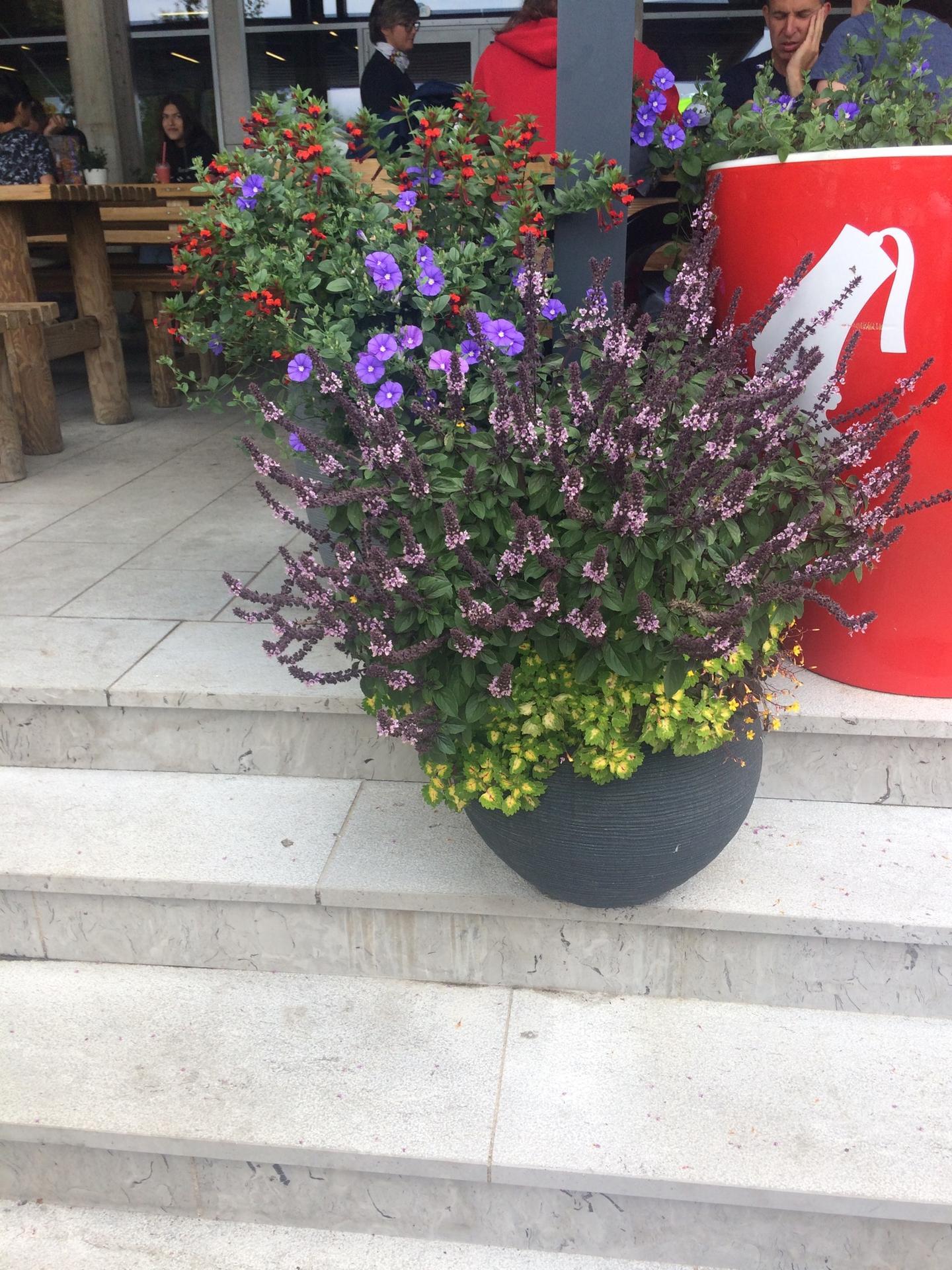 Ahojte. Vie mi niekto poradit, aké sú to kvety alebo rastliny? Ďakujem - Obrázok č. 1