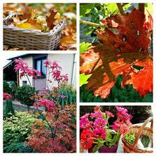 jesen u nas na chatke :-)