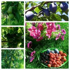 z vlastnej zahradky chuti vsetko najlepsie :-)