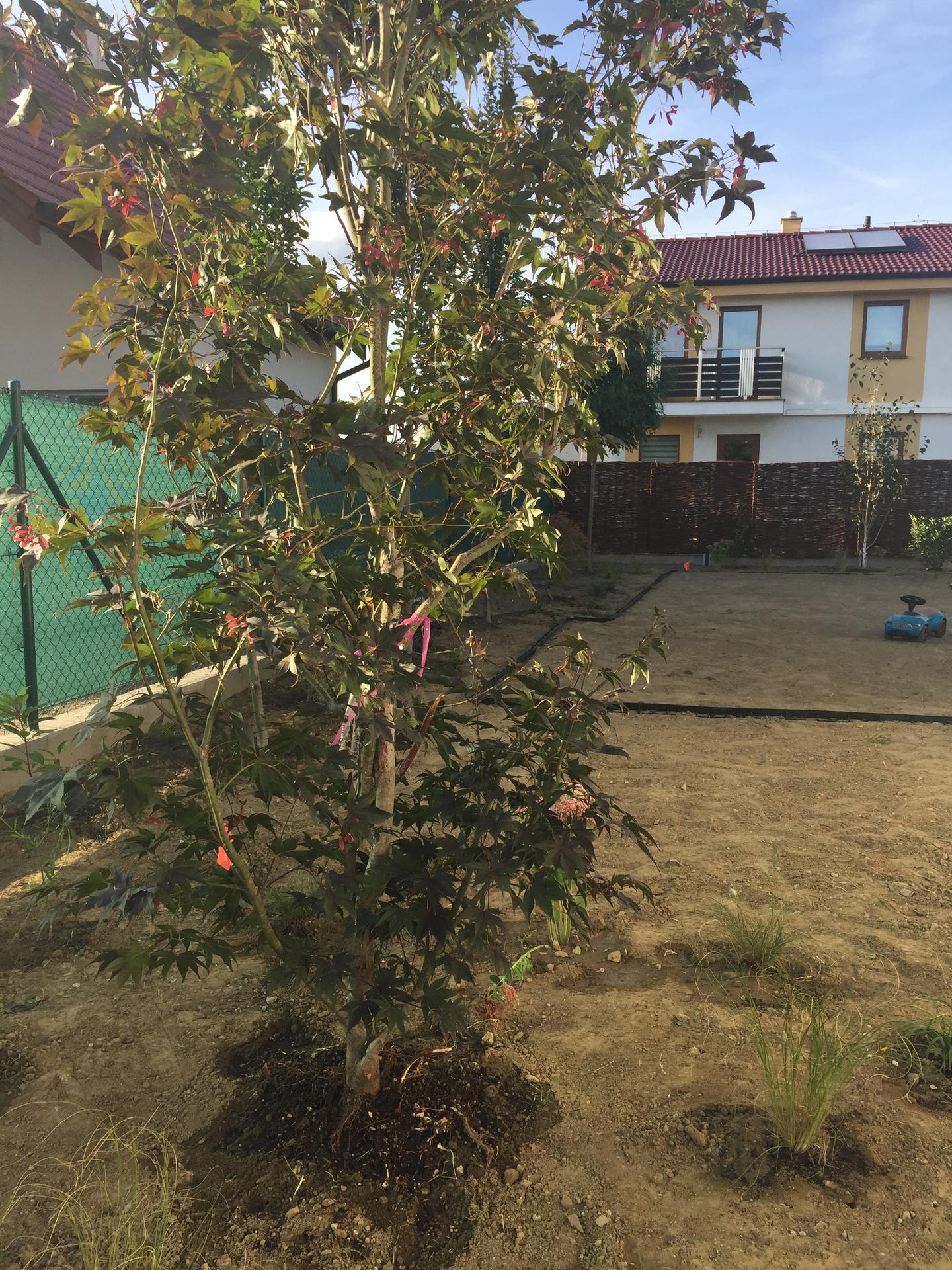 a robí sa záhradka - Obrázok č. 5