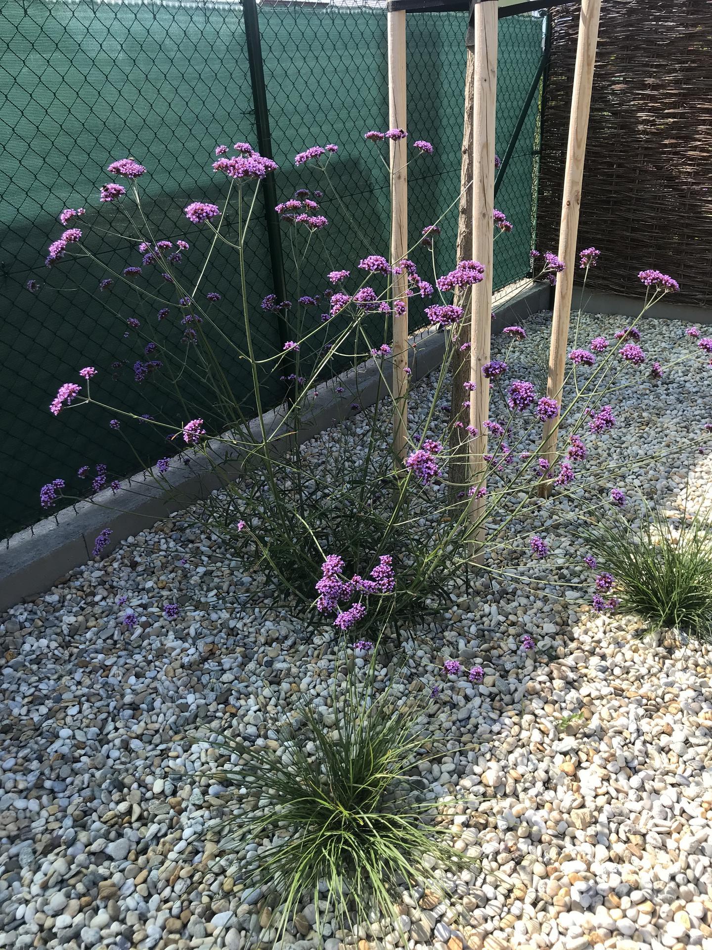 a robí sa záhradka - Obrázok č. 18
