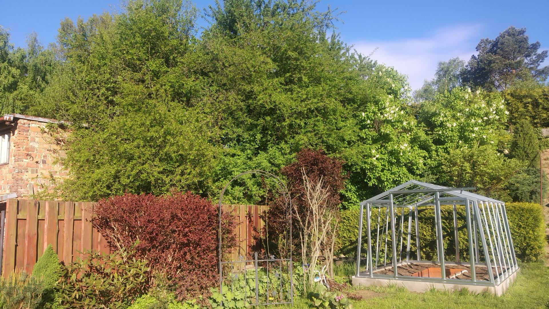 Zahrada 2021 a budování skleníku - Obrázek č. 15