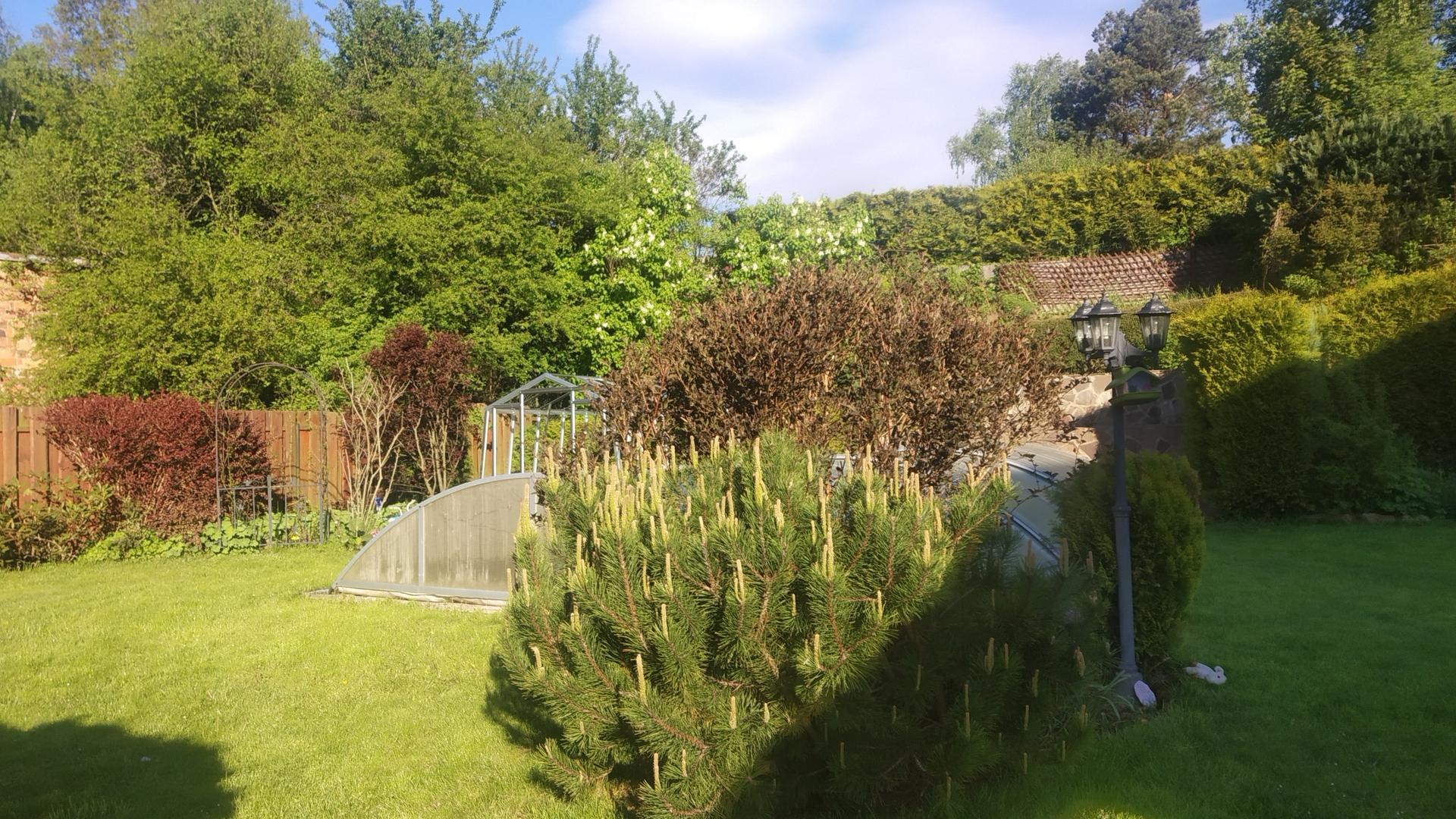 Zahrada 2021 a budování skleníku - Obrázek č. 17