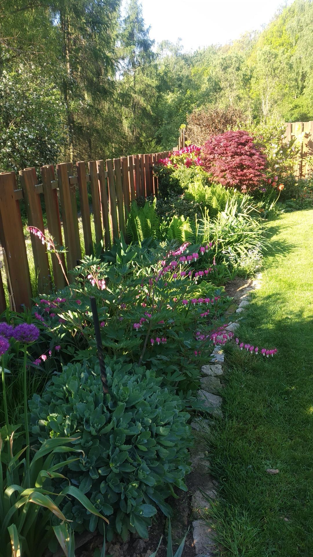Zahrada 2021 a budování skleníku - Letos srdíčka neomrzla, tak jsou krásná.