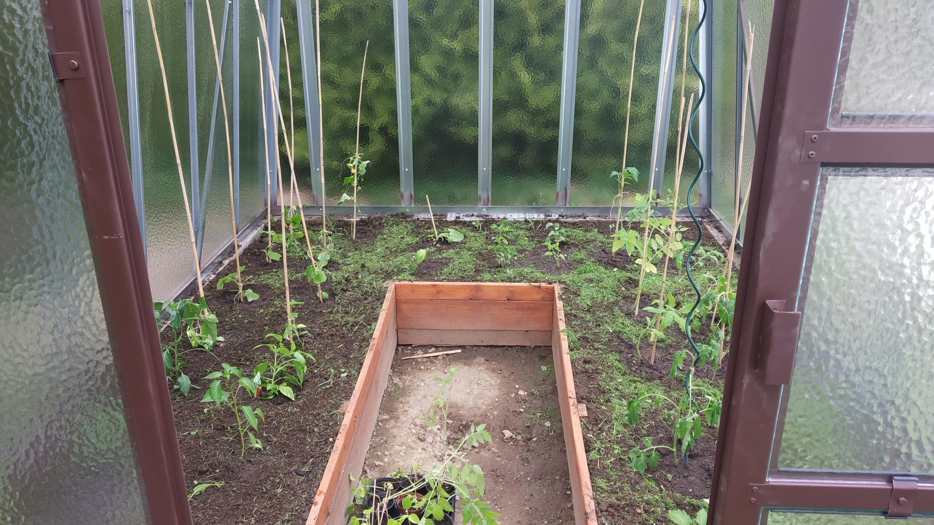 Zahrada 2021 a budování skleníku - Osázeno, dnes ještě dosypeme štěrk v chodníčku a dodám pevnější tyčky. My jsme chvátali, aby to šlo už do skleníku.