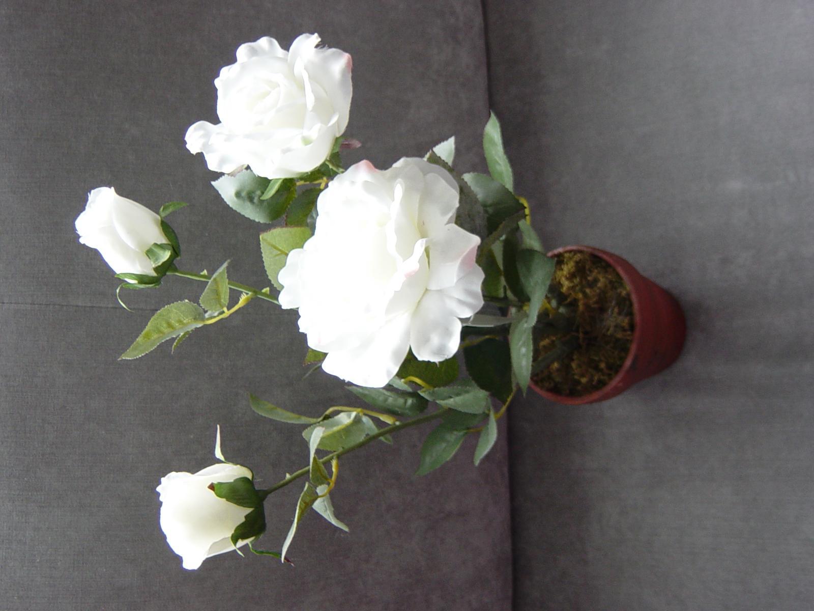 2 ružové kríčky v kvetináči - biela farba - Obrázok č. 1