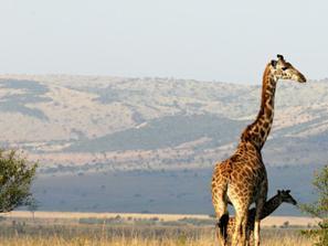 Svadobna cesta v Keni