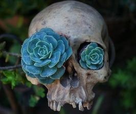 Splynutie s prirodou (trochu morbidne.. :-))