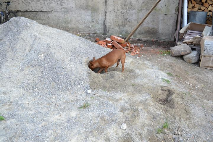Projekt - záhrada ;-) - Ako zabavit psa..