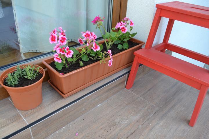 Projekt - záhrada ;-) - levandula a muskaty, uvidime co z toho bude :-)