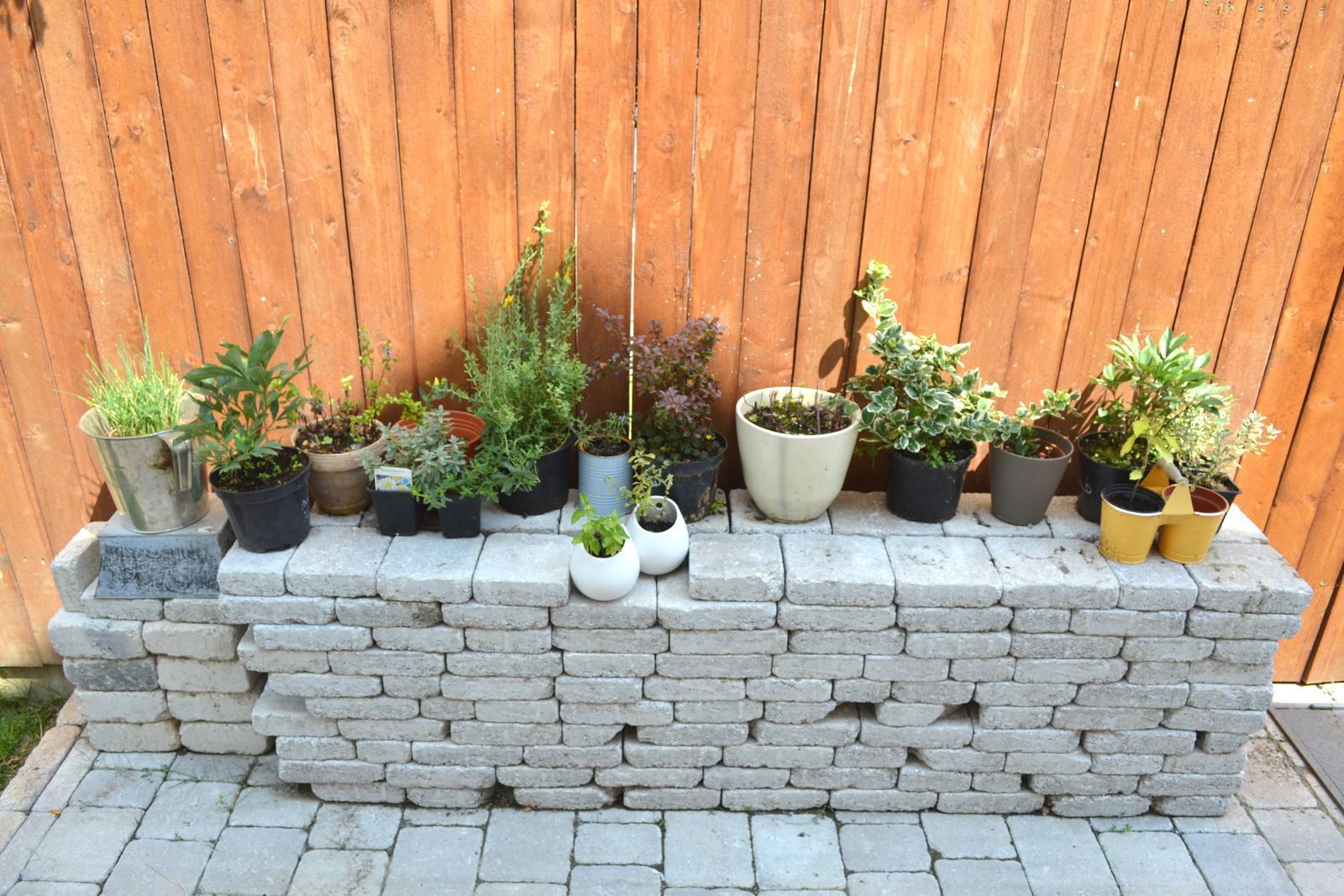Projekt - záhrada ;-) - cakaju na presadenie a na spravne miesto :-)