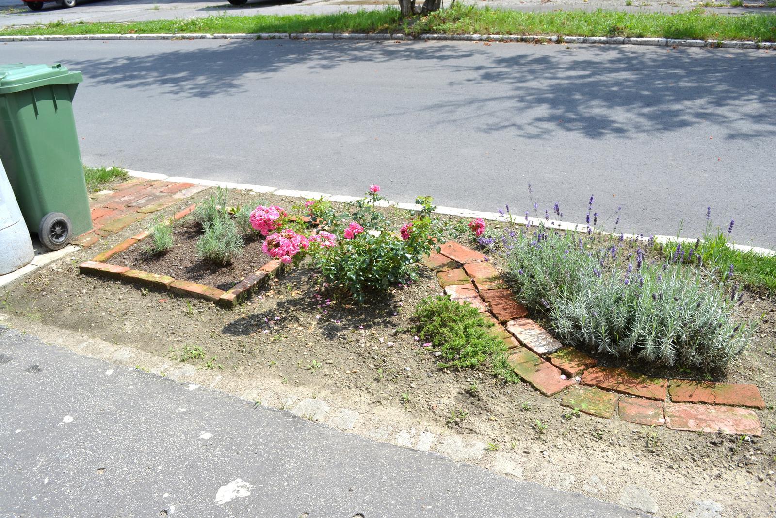 Projekt - záhrada ;-) - predzahradka zatial skromna, ale ruza a levandula mi robia velku radost!