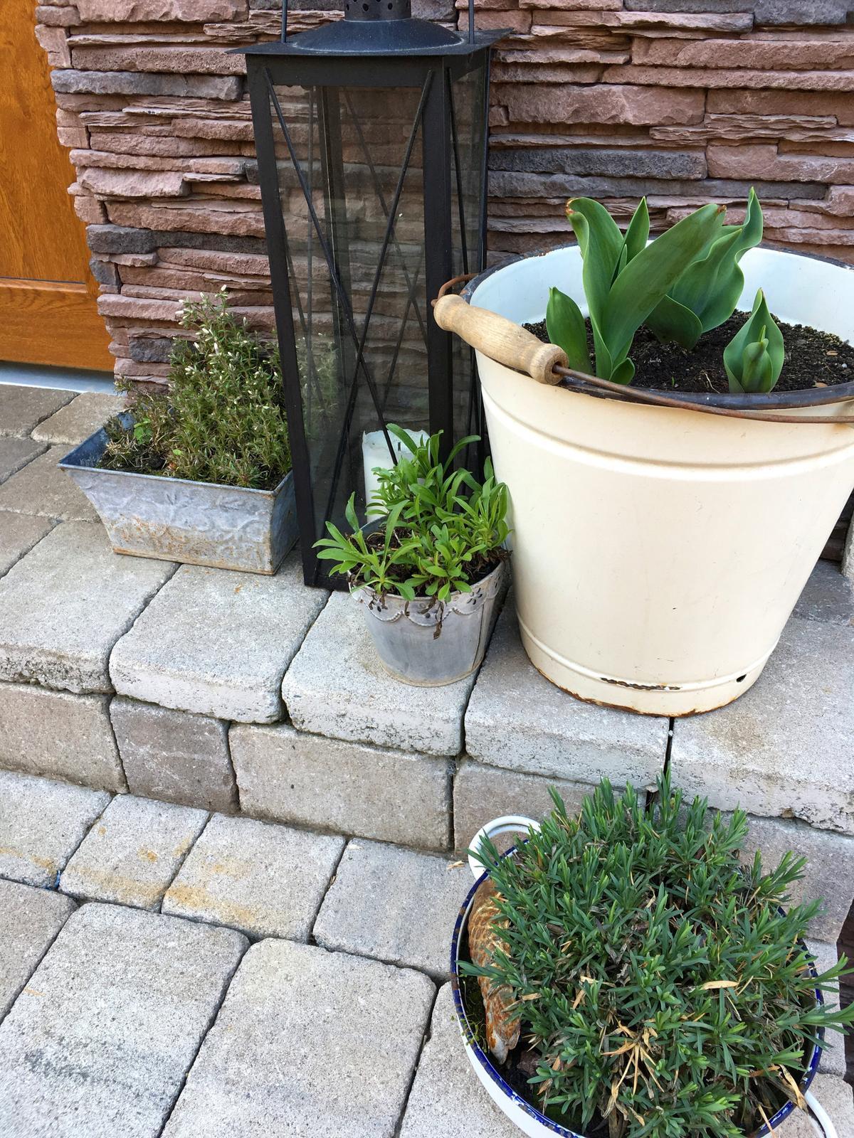 Projekt - záhrada ;-) - Aktuálne vchodové zátišie