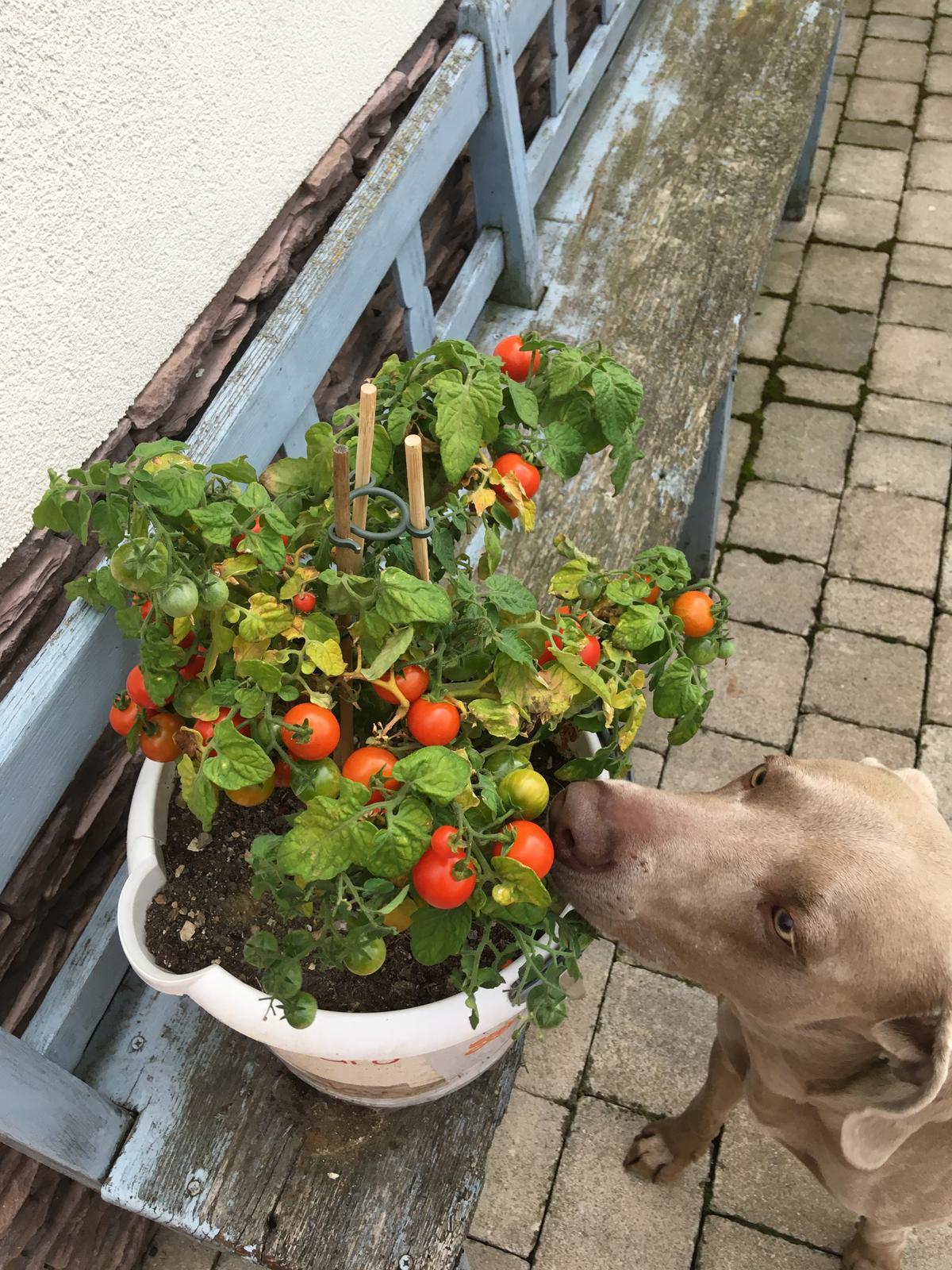 Projekt - záhrada ;-) - Ukáž sem, ja ti to oberiem :))