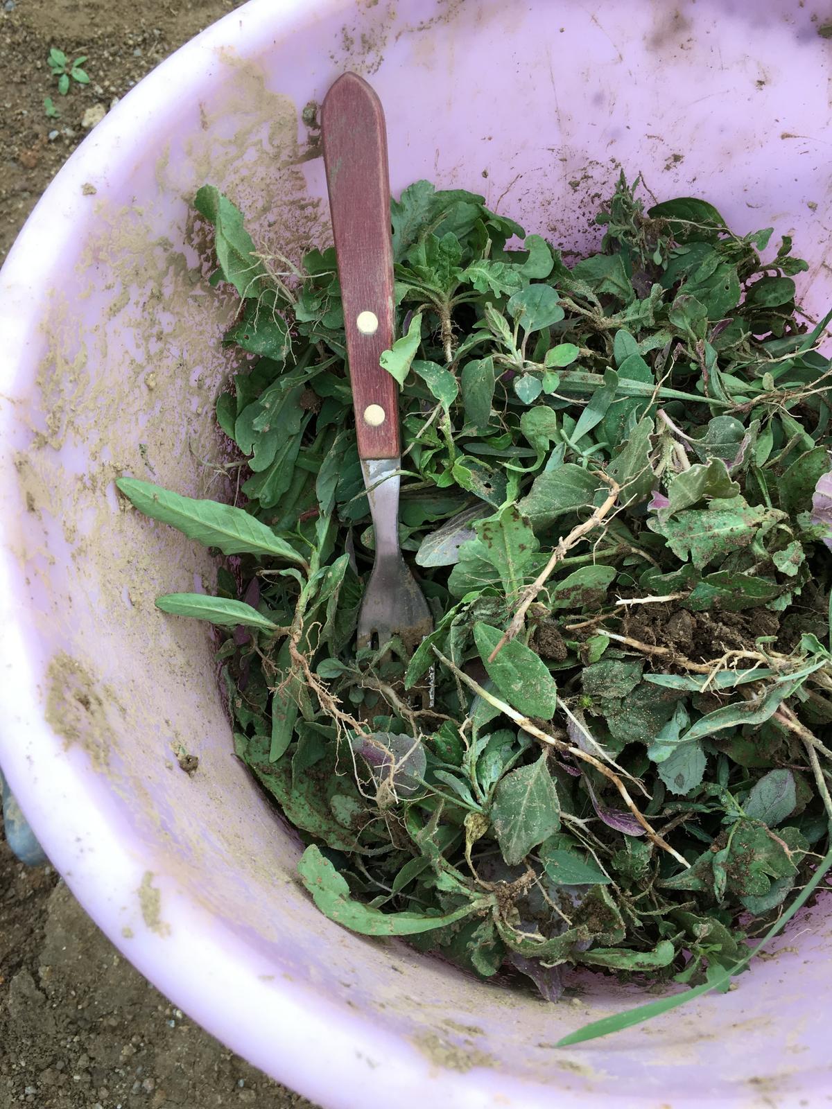 Záhrada v starom sade - vidlička lepšia ako motyka ;)