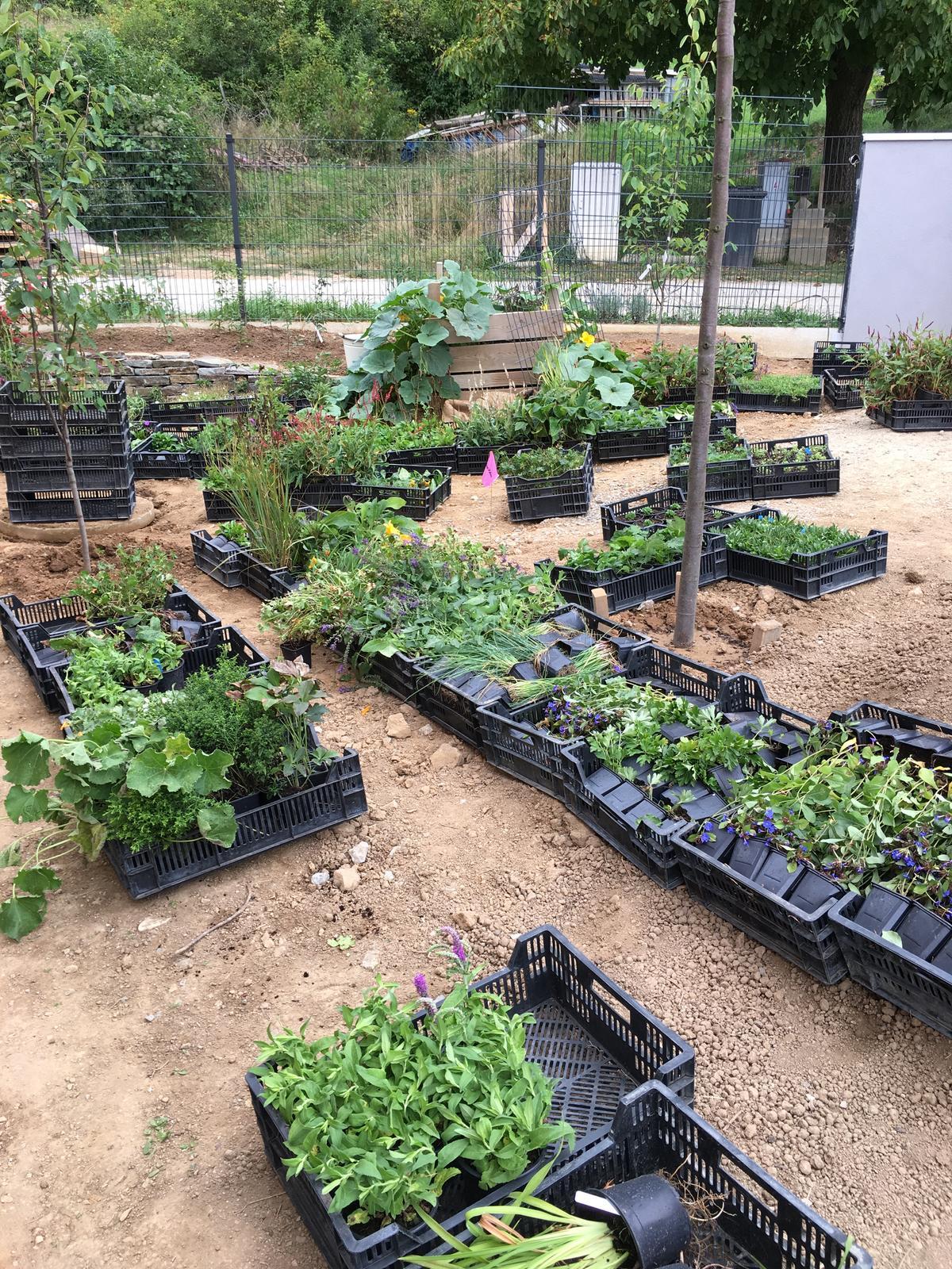 Záhrada v starom sade - trvalky a bylinky