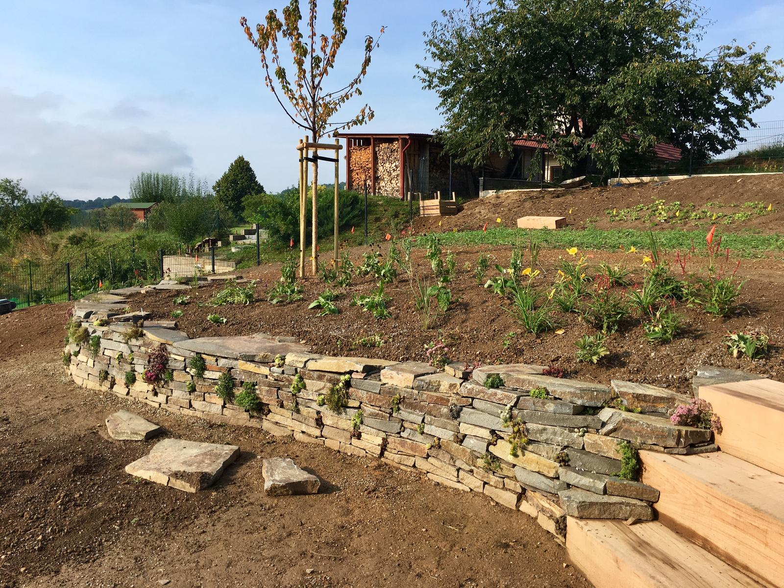 Záhrada v starom sade - Prvé záhony posadené. Vyzerá to zatiaľ dosť biedne a zle sa to fotí. Dúfam že sa čo najskôr rozrastú.