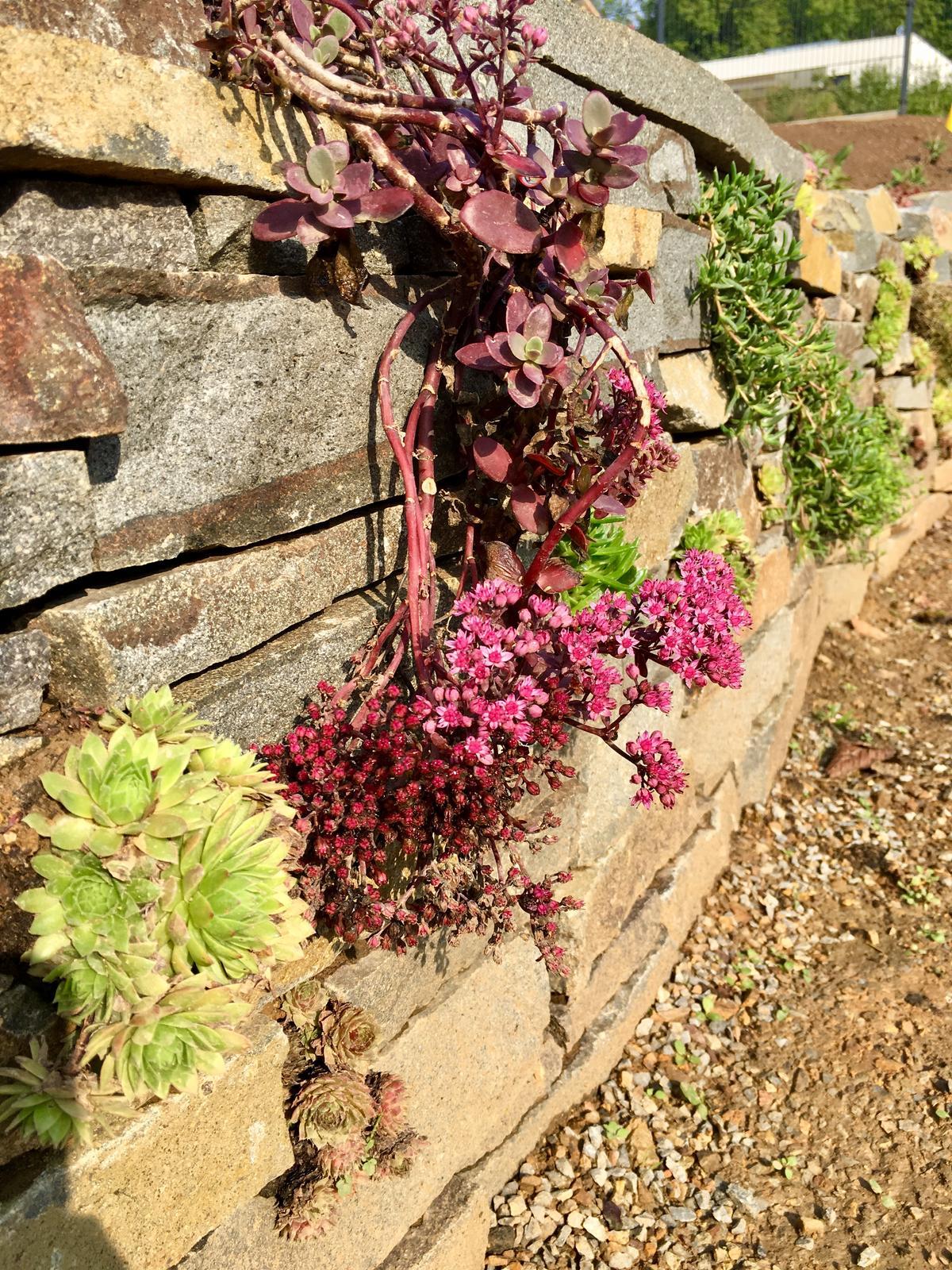 Záhrada v starom sade - Obrázok č. 17