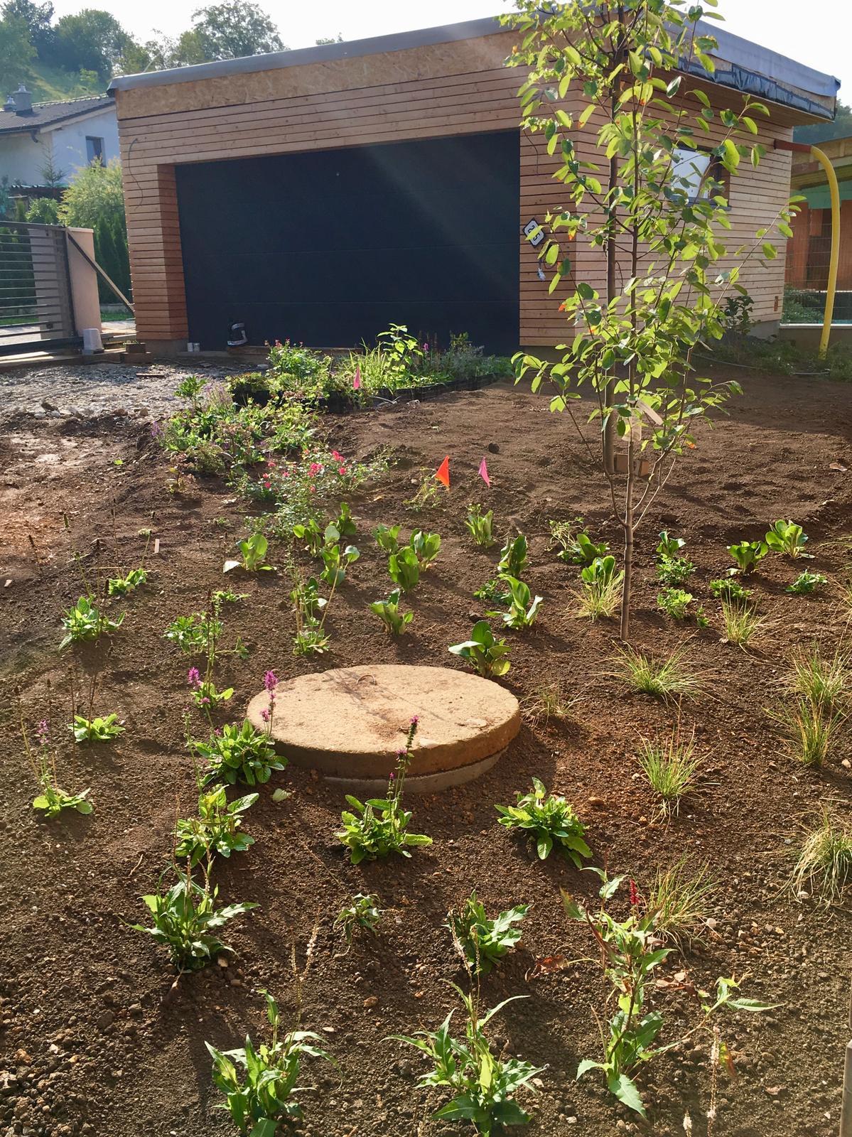 Záhrada v starom sade - Táto časť s muchovníkom a lipou sa mi zatiaľ najviac páči.