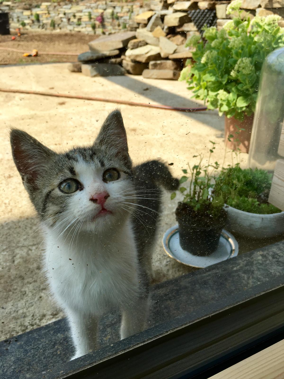 Záhrada v starom sade - Máme novú kamošku. Mladá pani od susedov chodí ku nám maškrtiť  ;)