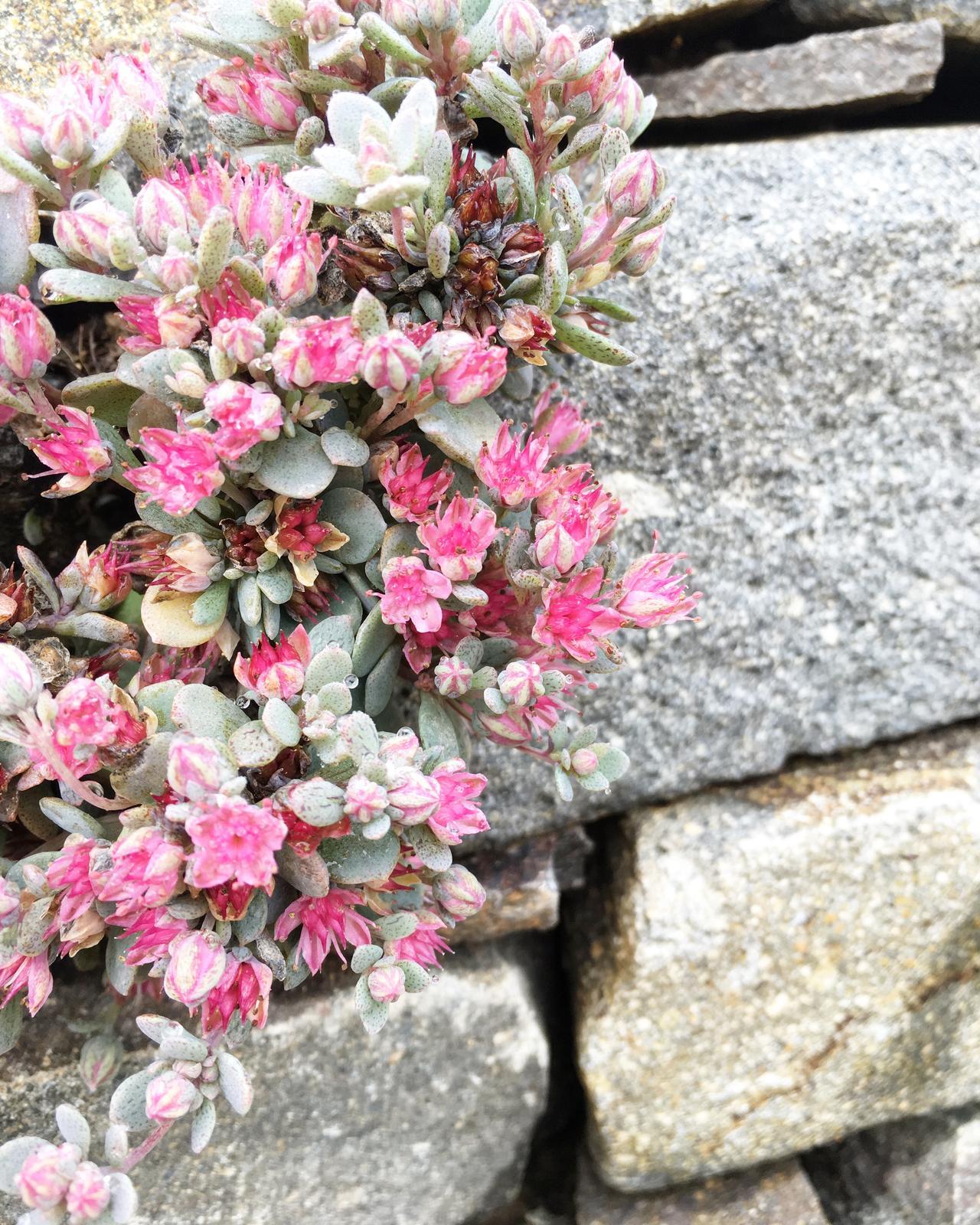 Záhrada v starom sade - Obrázok č. 25