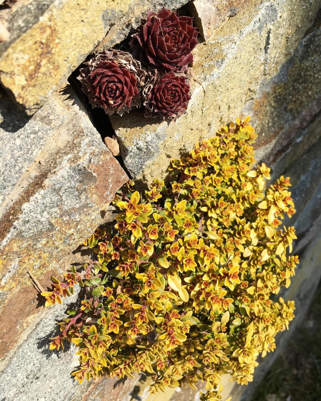 Záhrada v starom sade - Obrázok č. 40