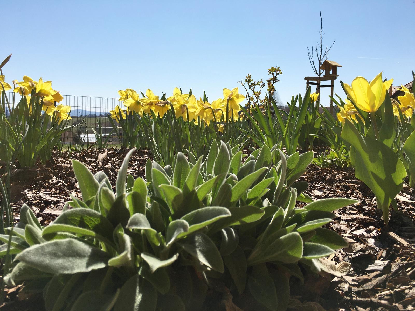 Záhrada v starom sade - Toto je jar