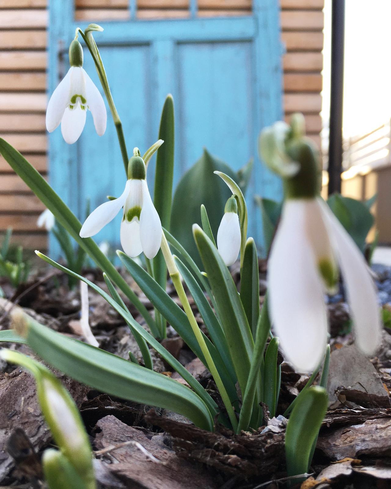Záhrada v starom sade - Aj tieto ešte kvitnú