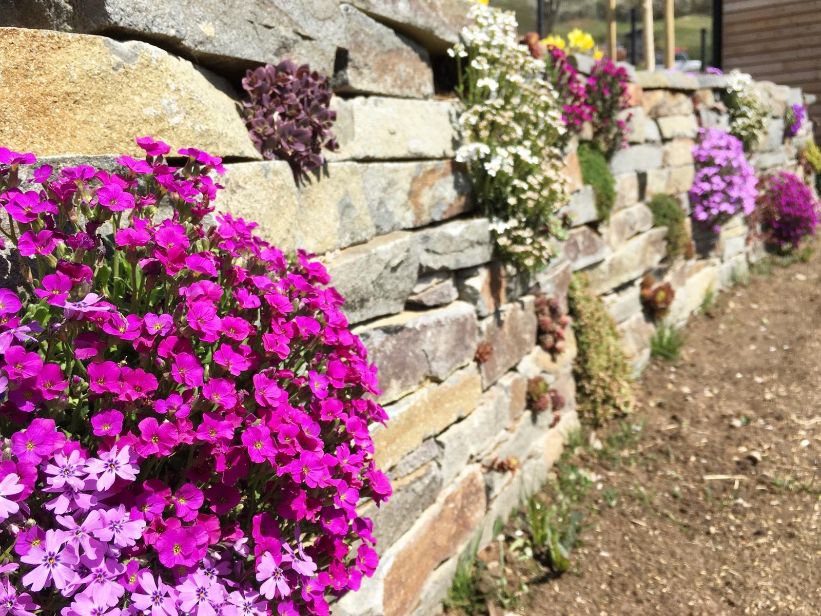 Záhrada v starom sade - Jar na múriku