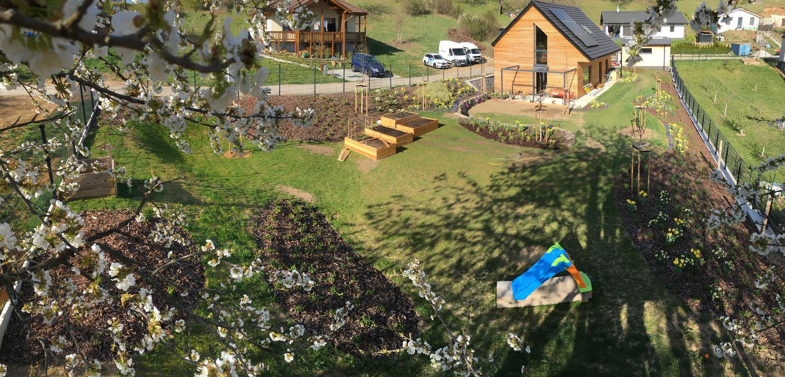 Záhrada v starom sade - Už aj čerešňa kvitne