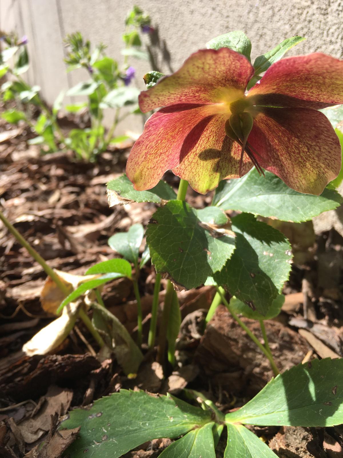 Záhrada v starom sade - Obrázok č. 59