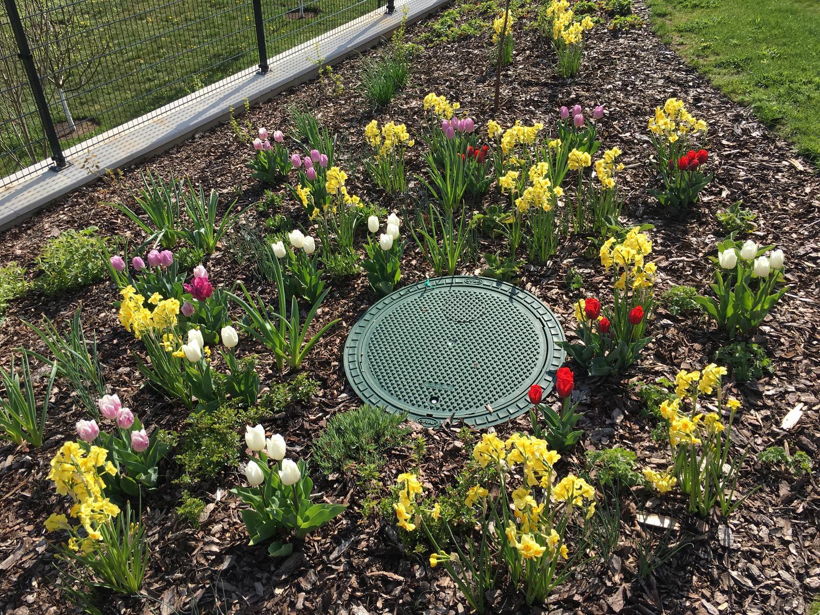 Záhrada v starom sade - Už je to zase iné, také pestrofarebnejšie 🌷Ak máte nejaký zaujímavý tip ako zakryť to veko z akumulačnej nádoby, kľudne píšte, necháme sa inšpirovať
