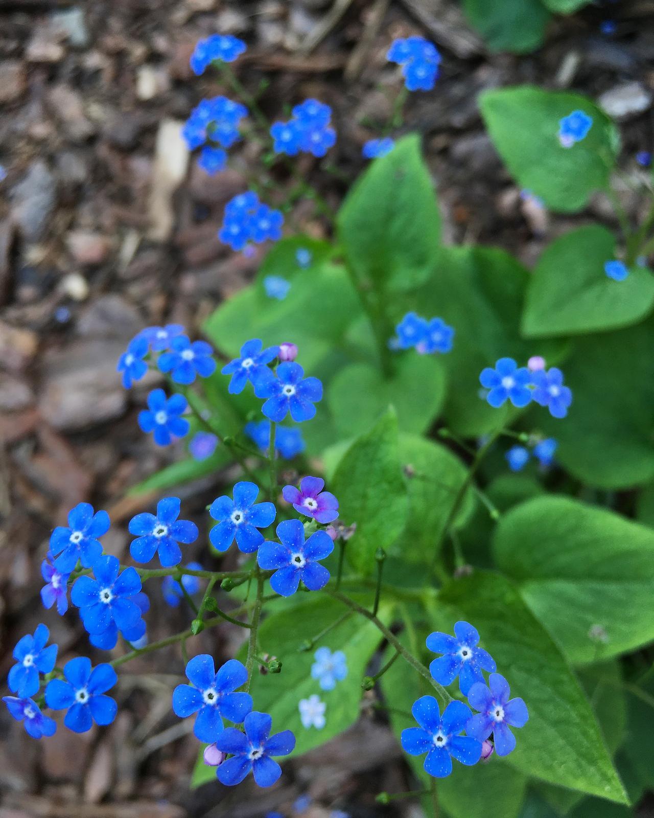 Záhrada v starom sade - Obrázok č. 66