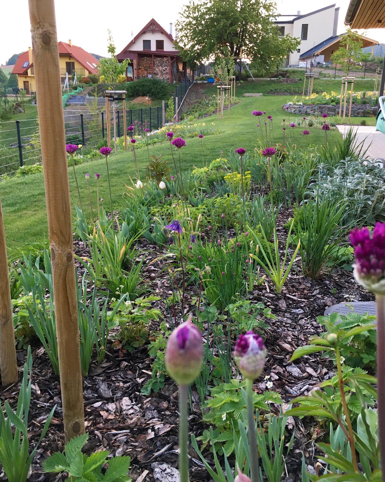 Záhrada v starom sade - Neuveriteľné čo dokáže jeden deň dažďa 🌱