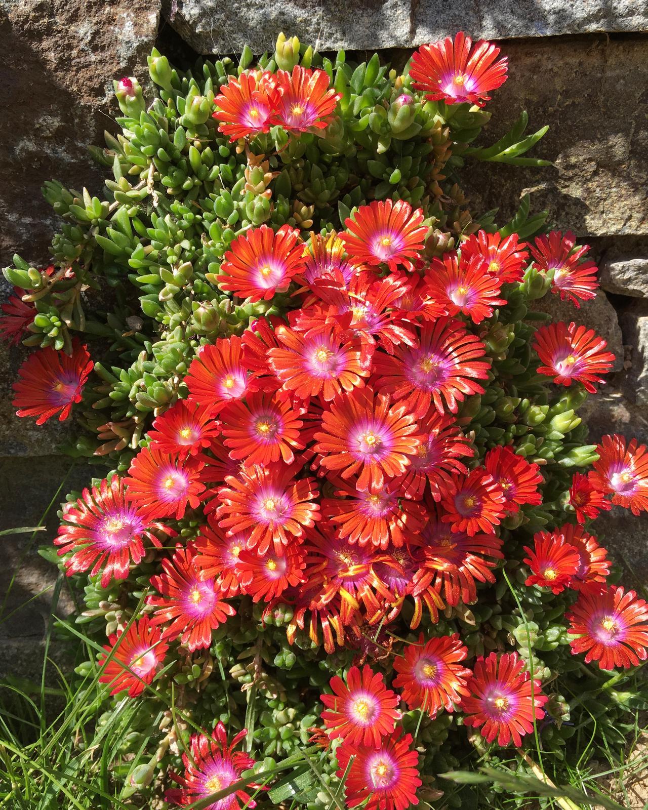Záhrada v starom sade - Obrázok č. 75