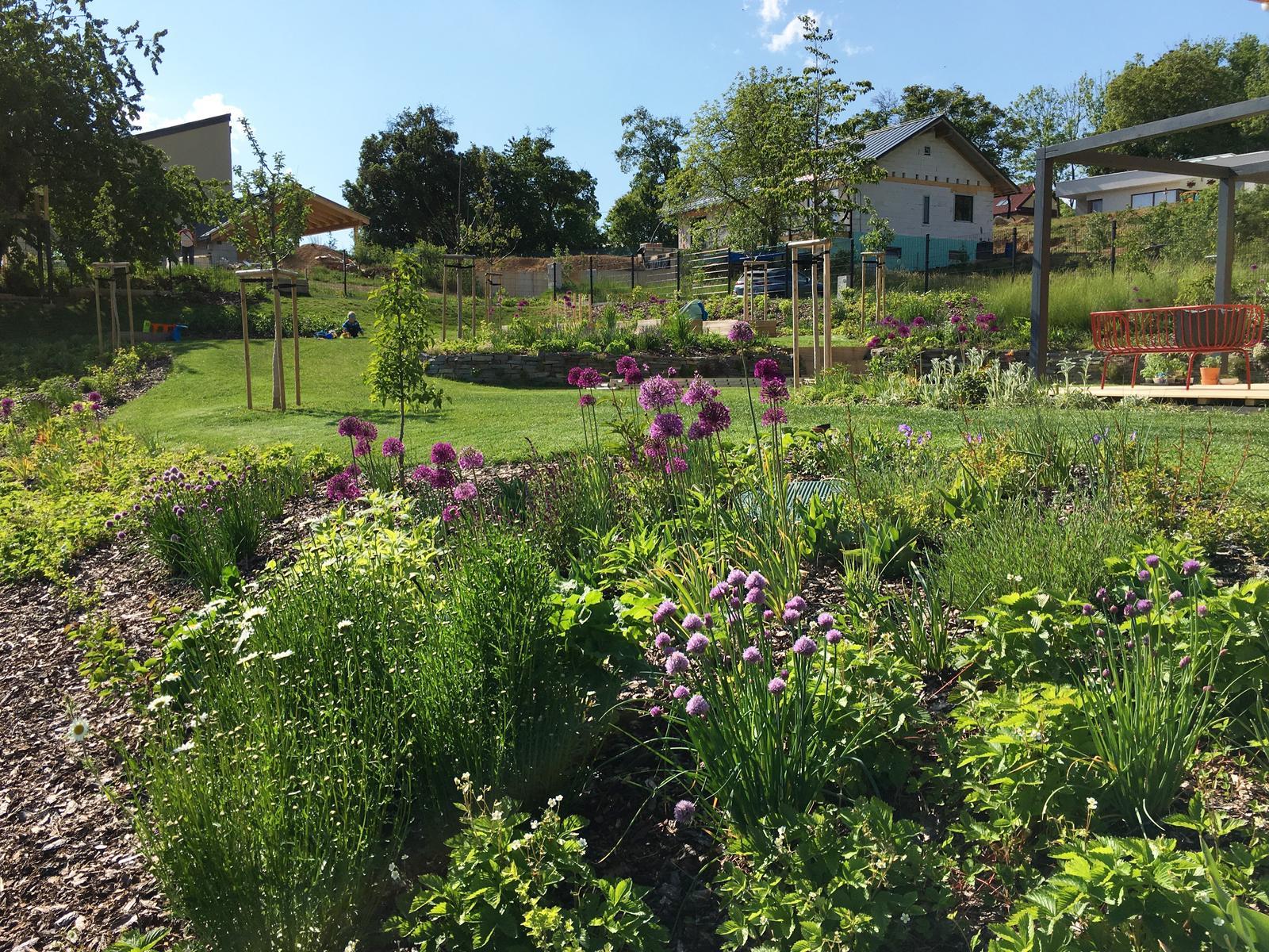 Záhrada v starom sade - Obrázok č. 83