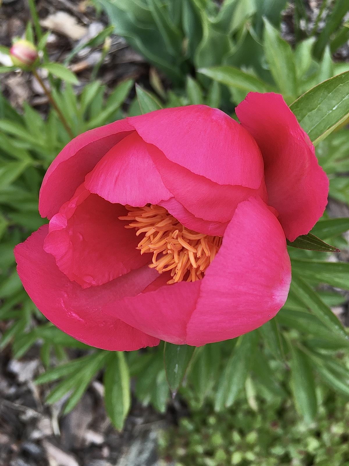 Záhrada v starom sade - Obrázok č. 85