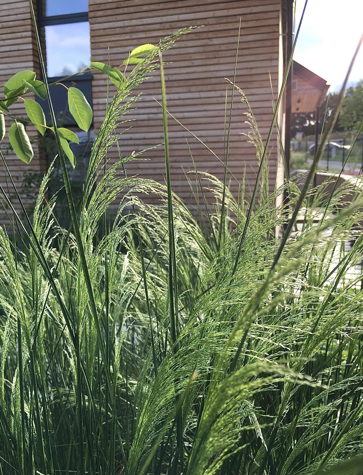 Záhrada v starom sade - Obrázok č. 90
