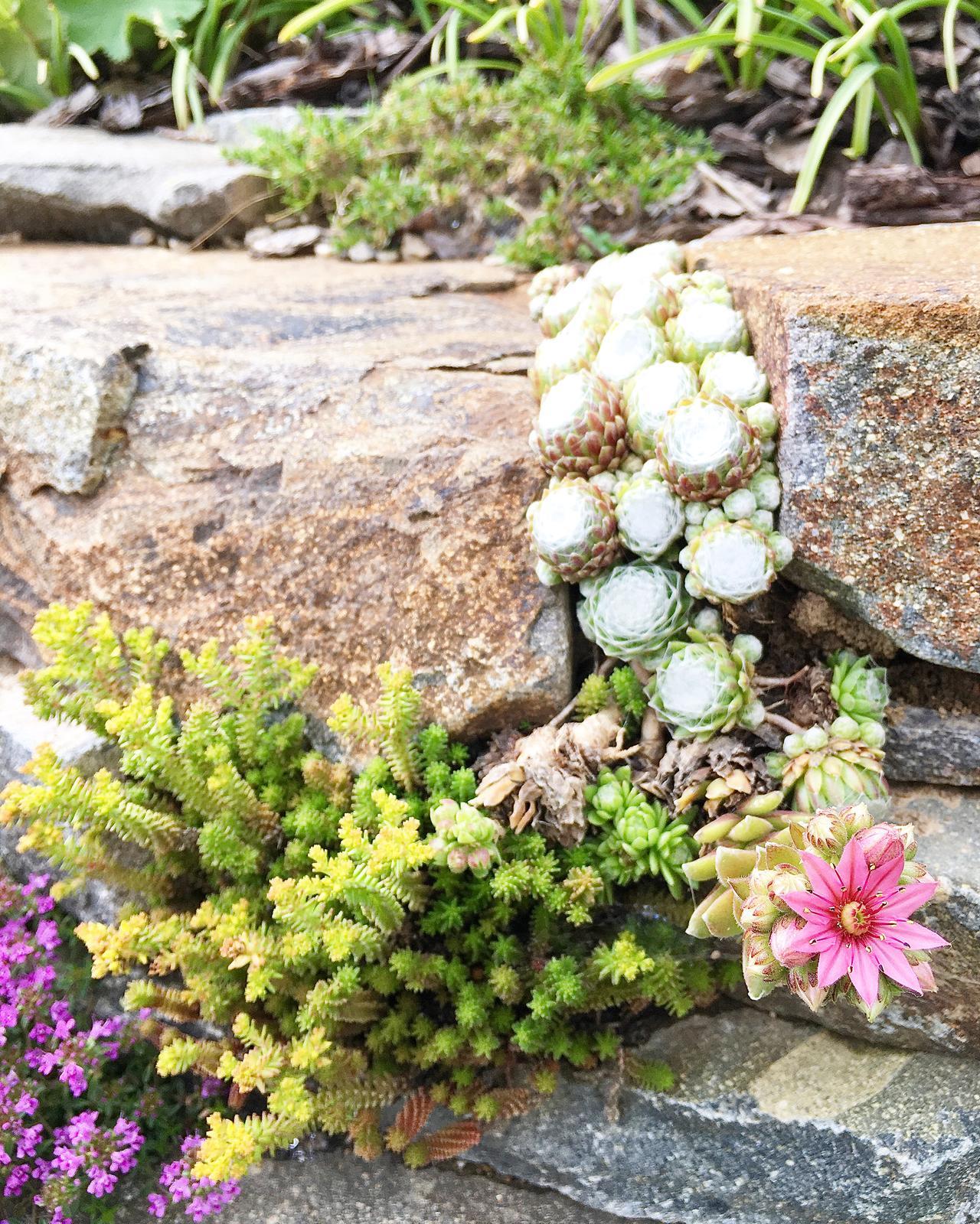 Záhrada v starom sade - Obrázok č. 92
