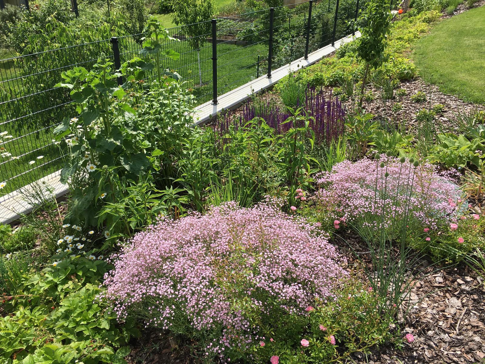 Záhrada v starom sade - Obrázok č. 95