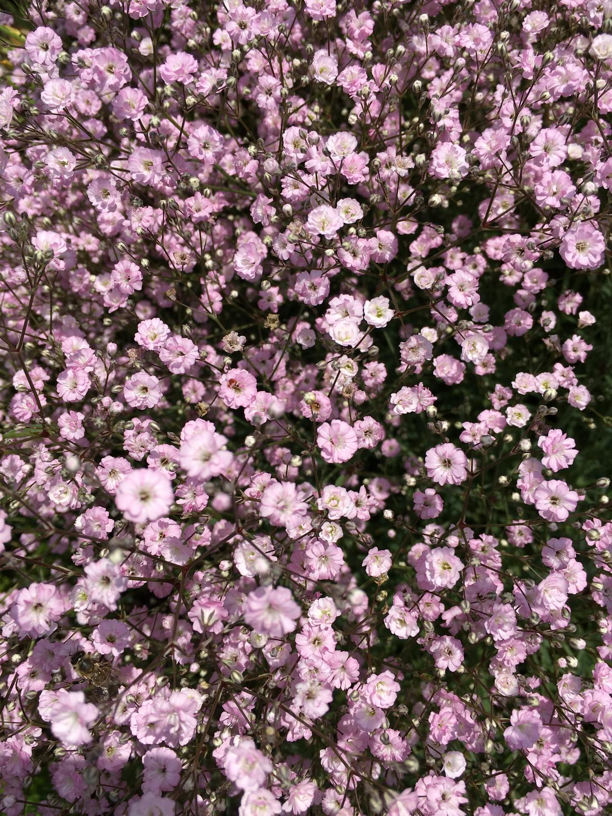 Záhrada v starom sade - Obrázok č. 96