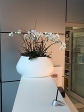 Kvety v mojej robotke, sice uz znacne odkvitnute, ale velmi sa mi pacia