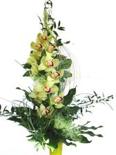 Miluju orchideje