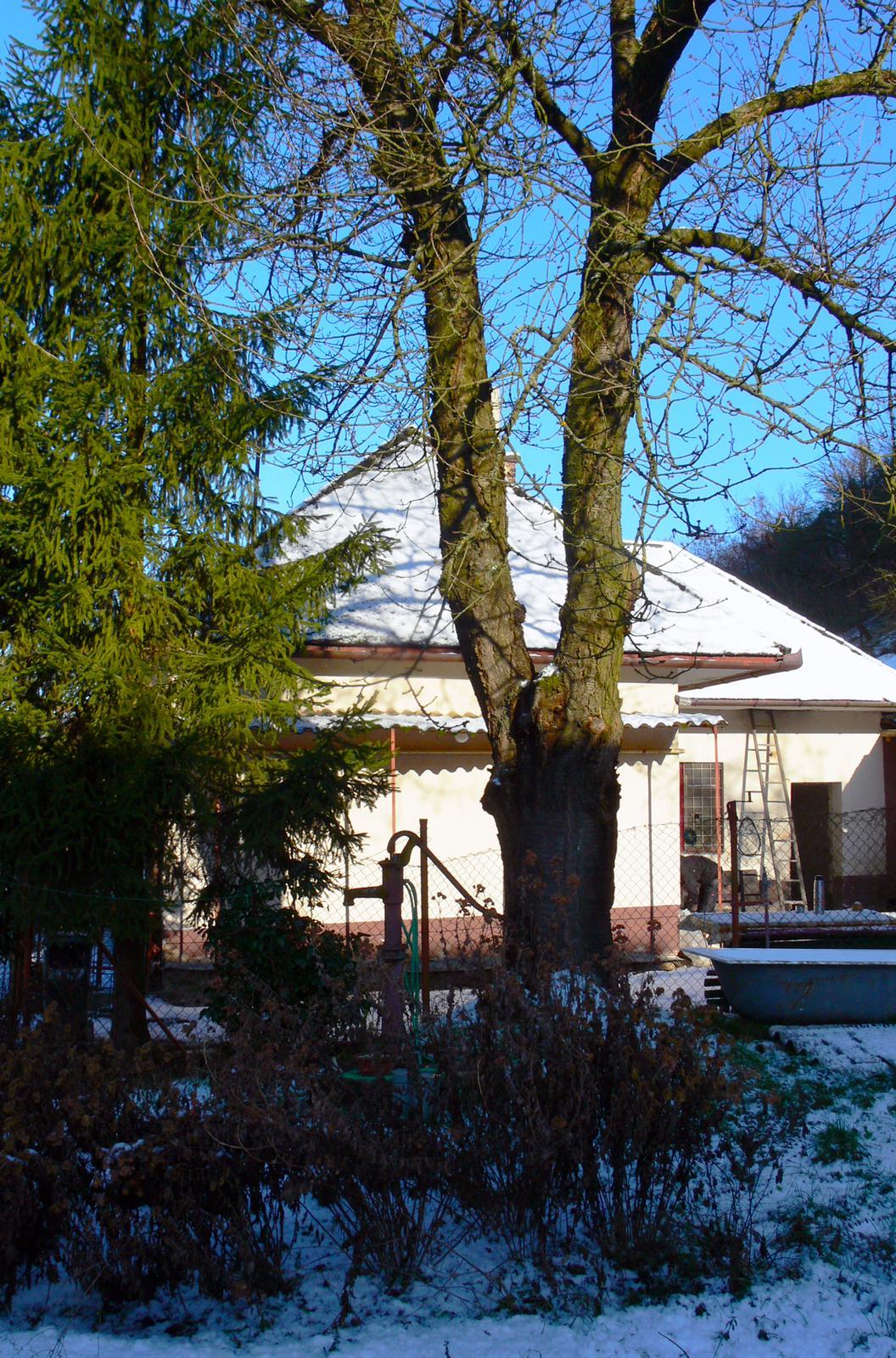 V zelenom dome - nič nové sa nedeje, práce stoja...tak aspoň jedna zimná čerešňa & dom