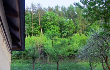 pohľad na zelený les  ma vždy poteší