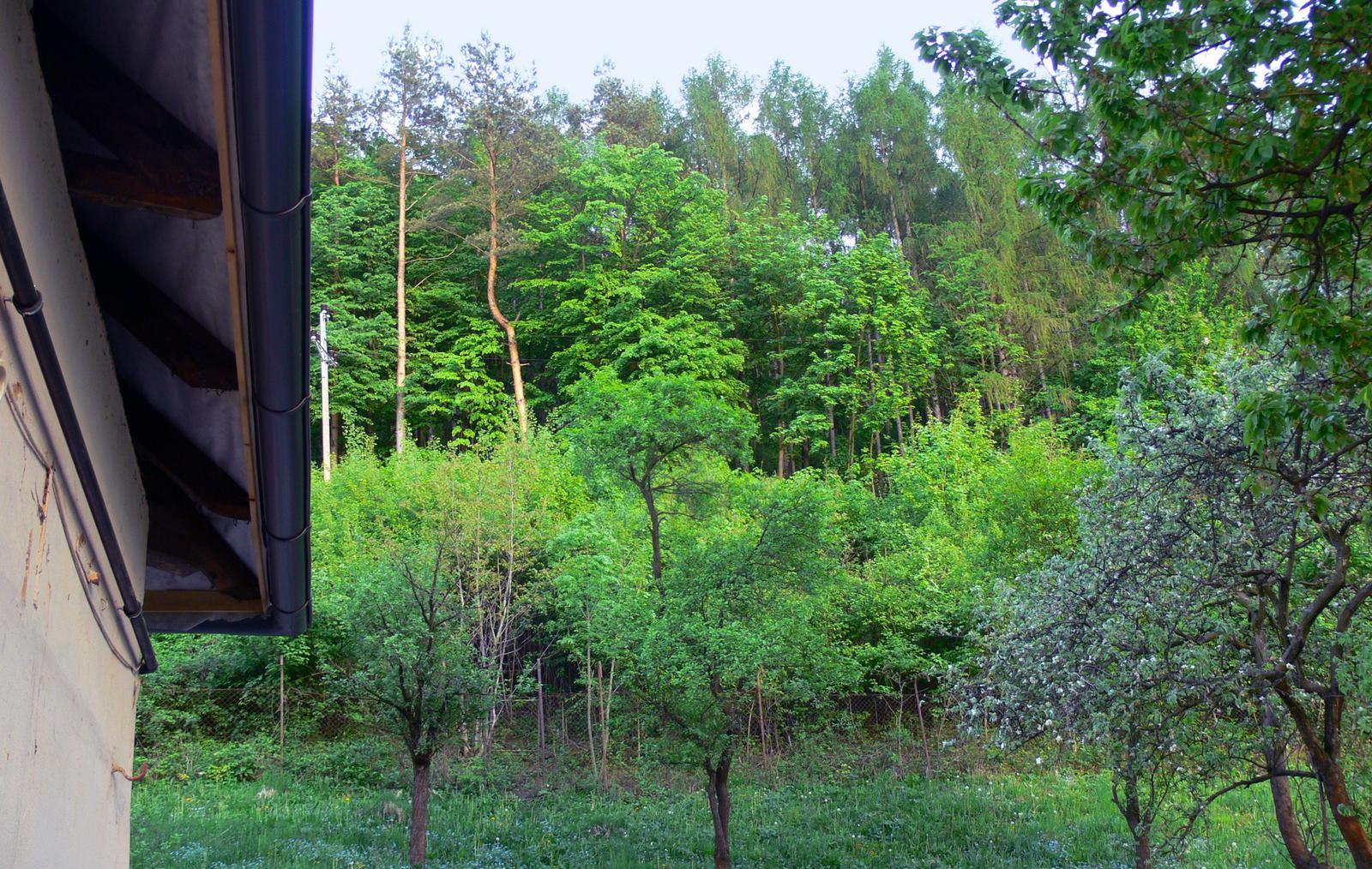 V zelenom dome - pohľad na zelený les  ma vždy poteší