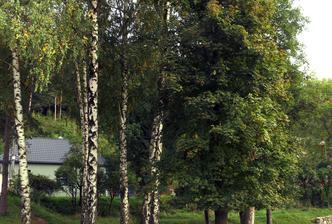 fotosúťaž: nájdi dom vyhráš strom