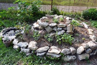 Rastlinky z babičkinej záhradky vyzerajú polozdochnuto, ale ujali sa, vrátane kostihoja, čo som rada lebo ten sa nerád presádza