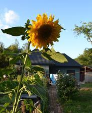 dom bez čerešne ale zato so slnečnicou